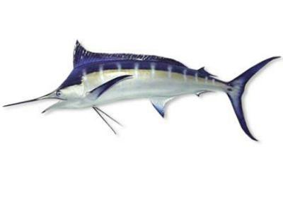Blue Marlin Fish Replica 10 Feet OAL 1/2 mount